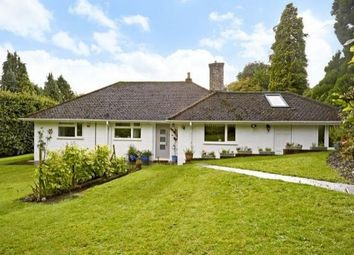 Thumbnail 3 bed bungalow to rent in Veras Walk, Storrington, Pulborough