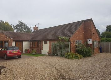 Thumbnail 4 bed detached bungalow to rent in Laurel Close, Red Lodge, Bury St. Edmunds