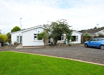 Thumbnail 5 bedroom bungalow for sale in Eglantine Road, Lisburn