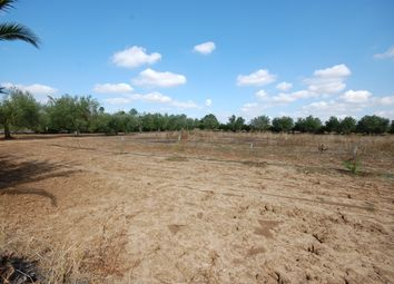 Thumbnail Land for sale in Farmland, Casarano, Lecce, Puglia, Italy