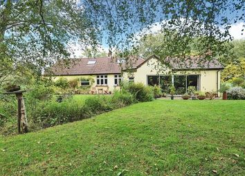 Thumbnail 4 bed detached bungalow for sale in West End, Surrey
