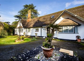 Thumbnail 4 bed bungalow for sale in Wellingtonia Avenue, Crowthorne, Berkshire