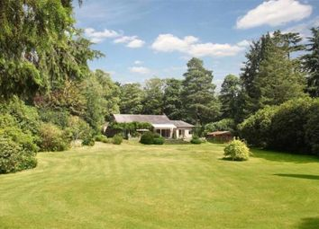 Thumbnail 5 bedroom detached house for sale in Wentworth Drive, Wentworth, Virginia Water