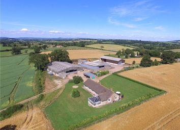 Thumbnail Farm for sale in Fifehead Neville, Sturminster Newton