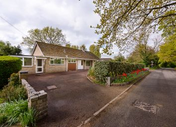 Thumbnail 4 bed detached bungalow for sale in Burgate Lane, Alpington