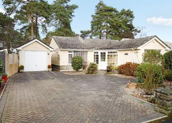 Thumbnail 2 bed bungalow to rent in Shirley Close, West Moors, Ferndown