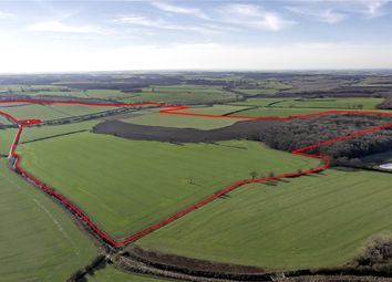 Thumbnail Land for sale in Great Bradley, Newmarket, Suffolk