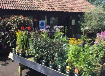 Thumbnail Restaurant/cafe to let in Kelways Garden Centre, Langport