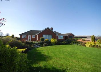 Thumbnail 3 bed detached bungalow to rent in Much Marcle, Ledbury, Herefordshire