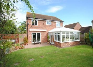 Thumbnail 4 bed property to rent in Barbel Road, Colchester