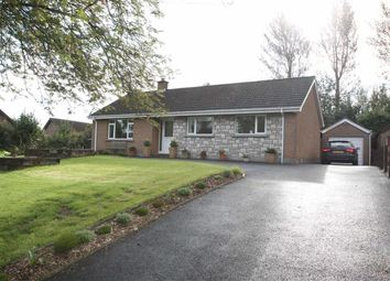 Thumbnail 3 bed detached bungalow for sale in Saintfield, Lisburn Road, Ballynahinch