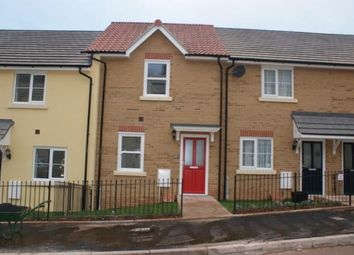 Thumbnail 2 bed terraced house to rent in Darwin Crescent, Torquay