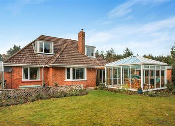 Thumbnail 3 bed bungalow for sale in Hyde, Wareham