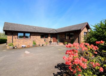 Thumbnail 4 bed bungalow for sale in Forfar Road, Coupar Angus