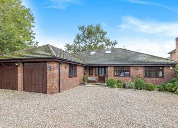 Thumbnail 4 bed detached bungalow for sale in Nash Grove Lane, Finchampstead, Wokingham