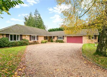 Thumbnail 4 bedroom bungalow for sale in Bearswood End, Beaconsfield