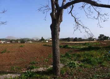 Thumbnail Land for sale in 07460 Pollença, Balearic Islands, Spain