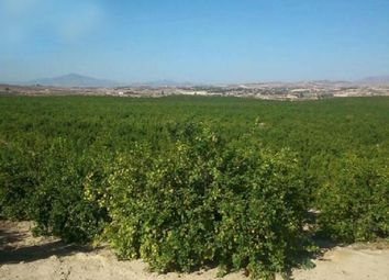 Thumbnail Land for sale in San Isidro, San Isidro, Spain