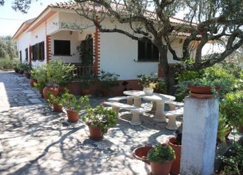 Thumbnail 3 bed farmhouse for sale in Montemor-O-Novo, 7050, Portugal