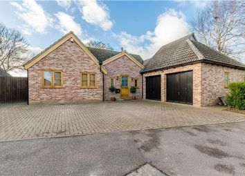 Thumbnail Detached bungalow for sale in Walnut Drive, Great Shelford, Cambridge
