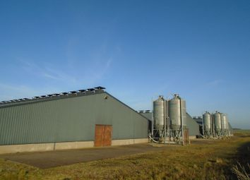 Thumbnail Farm for sale in Longside, Peterhead