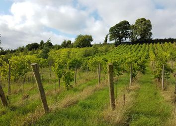 Thumbnail Land for sale in Vineyard At Redyeates Cross, Cheriton Fitzpaine, Crediton, Devon