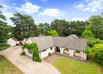 Thumbnail 5 bed bungalow for sale in Avon Avenue, Ringwood, Hampshire