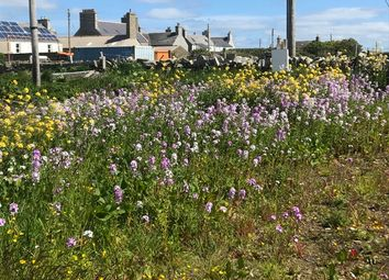 Land for sale in Whitehall, Stronsay, Orkney KW17