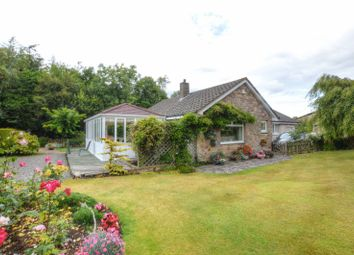 Thumbnail 3 bed bungalow for sale in Warenford, Belford
