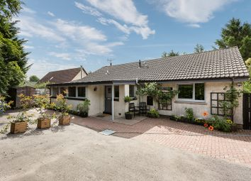 Thumbnail 4 bed bungalow for sale in Duncan Road, Letham, Angus
