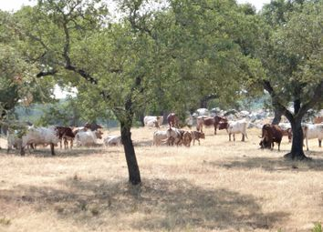 Thumbnail Farm for sale in Évora, Mora, Évora, Alentejo, Portugal