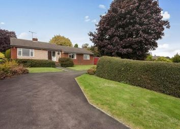 Thumbnail 4 bed detached bungalow to rent in Lightwood Road, Marsh Lane, Sheffield