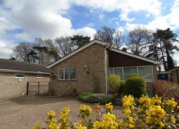 Thumbnail 3 bed detached bungalow for sale in Meadow Drive, Lakenheath, Brandon