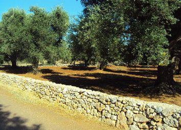 Thumbnail Land for sale in Strada Provinciale 30, San Vito Dei Normanni, Brindisi, Puglia, Italy