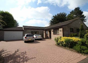 Thumbnail 4 bed bungalow to rent in Santon Close, Thetford