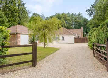Thumbnail 5 bed detached bungalow for sale in Lady Lane, Hainford, Norwich
