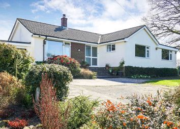 Thumbnail 3 bed bungalow for sale in Cookbury, Holsworthy