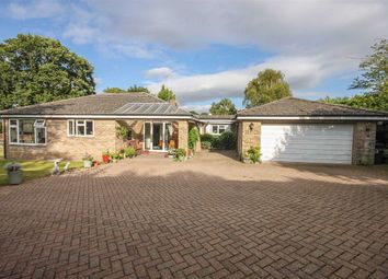 Thumbnail 4 bed detached bungalow for sale in Mount Pleasant, Hertford Heath, Hertford