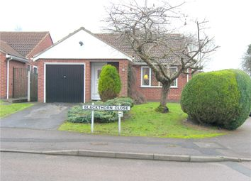 Thumbnail 2 bedroom detached bungalow to rent in Blackthorn Close, Oakwood, Derby
