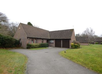 Thumbnail 4 bed bungalow to rent in Mayfield, Rowledge, Farnham