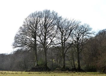 Thumbnail Land for sale in Land At Four Beeches Farm, Lake, Sourton, Devon