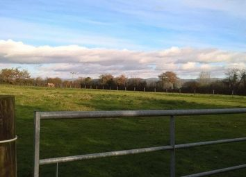 Thumbnail Equestrian property for sale in Bere Alston, Yelverton