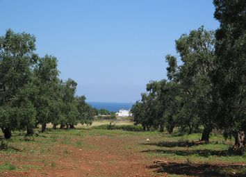 Thumbnail Land for sale in Via Santa Sabina, Carovigno, Brindisi, Puglia, Italy