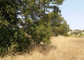 Thumbnail Land for sale in Contrada San Salvatore, Ostuni, Brindisi, Puglia, Italy