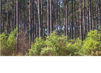 Thumbnail Land for sale in 2941 Acres Long Road, Mossy Head, Fl, 32434
