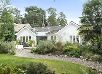 Thumbnail 4 bed detached bungalow for sale in Courtleas, Cobham