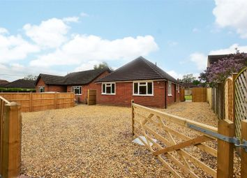 Thumbnail 3 bed detached bungalow to rent in Chavey Down Road, Winkfield Row, Winkfield, Berkshire