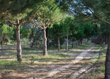 Thumbnail Land for sale in Rua Do Alentejo, 7565, Portugal
