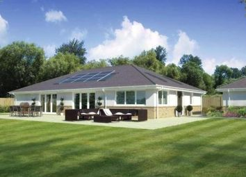 Thumbnail 4 bed bungalow for sale in Cedar Avenue, St Leonards, Ringwood