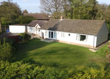 Thumbnail 4 bedroom bungalow for sale in The Park, Great Barton, Bury St. Edmunds